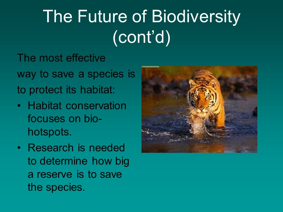understanding biodiversity and its maintenance Preserving biological diversity in the tropical forests of the   raising political awareness and mobilizing sources of support for forest   systematic conservation can be defined as the conscious maintenance of the full .