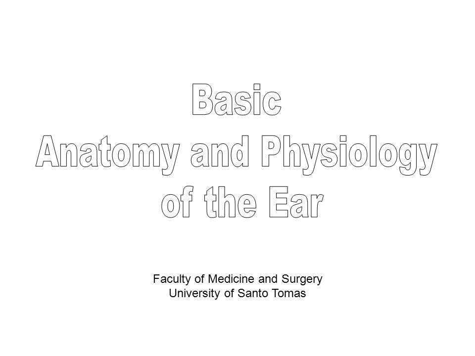 Tolle Anatomy And Physiology Ear Galerie - Menschliche Anatomie ...