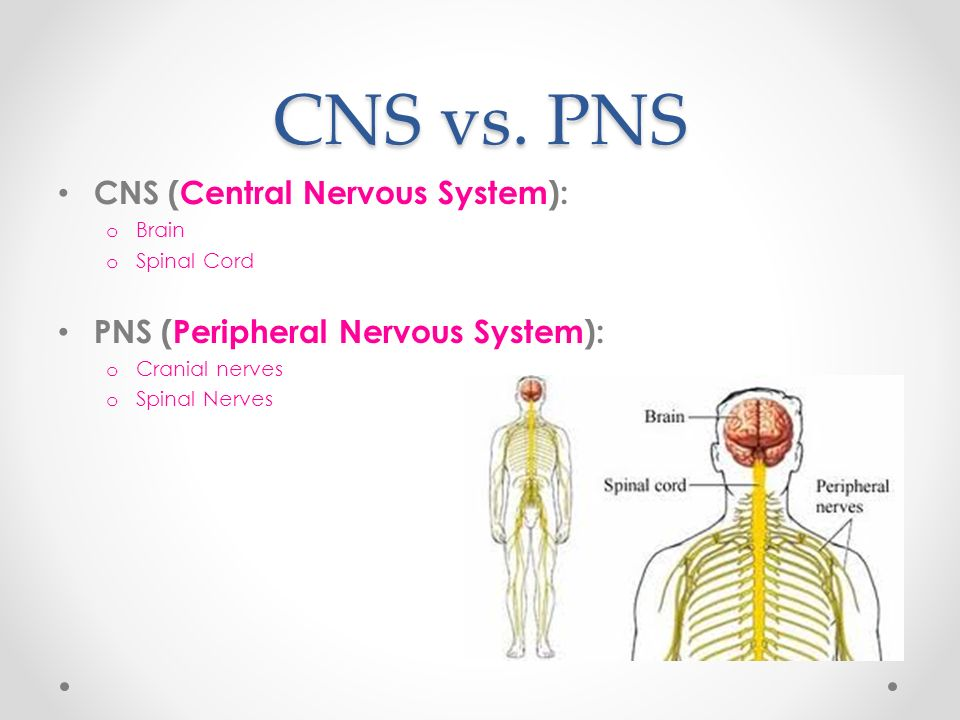 Central Nervous System Ch - John O\'Keefe