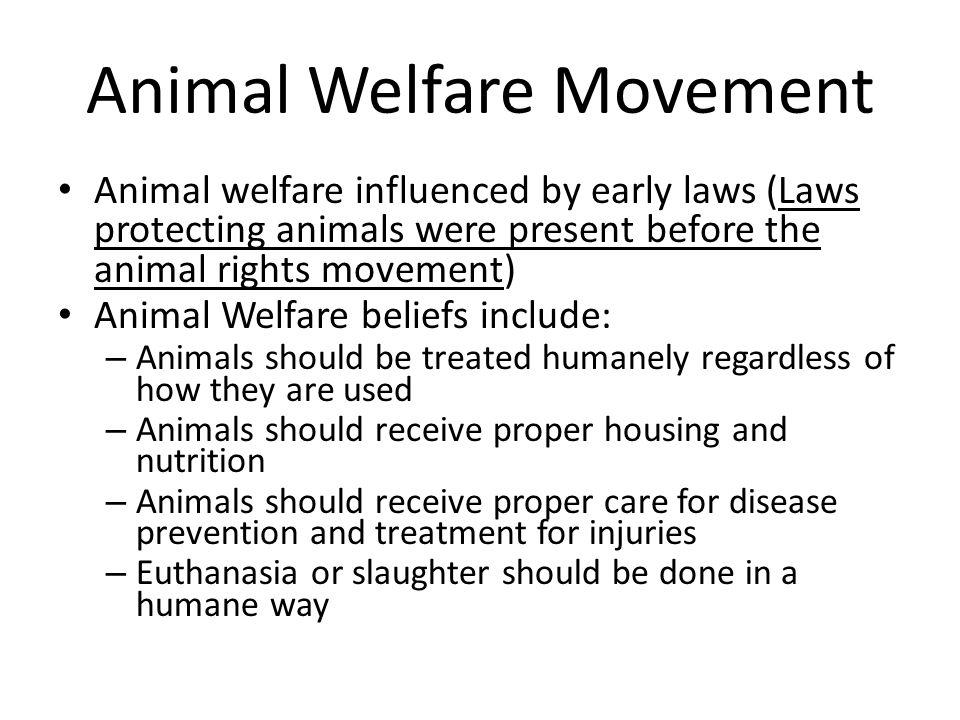 Essay animals rights movement