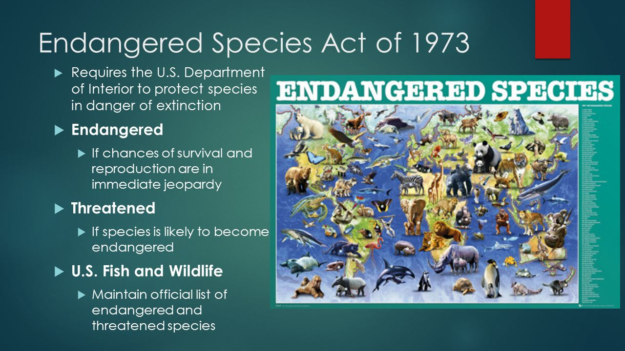 endangered species act Defenders of wildlife our work  and federal laws that protect imperiled species the endangered species act (esa) is the most powerful of these tools.