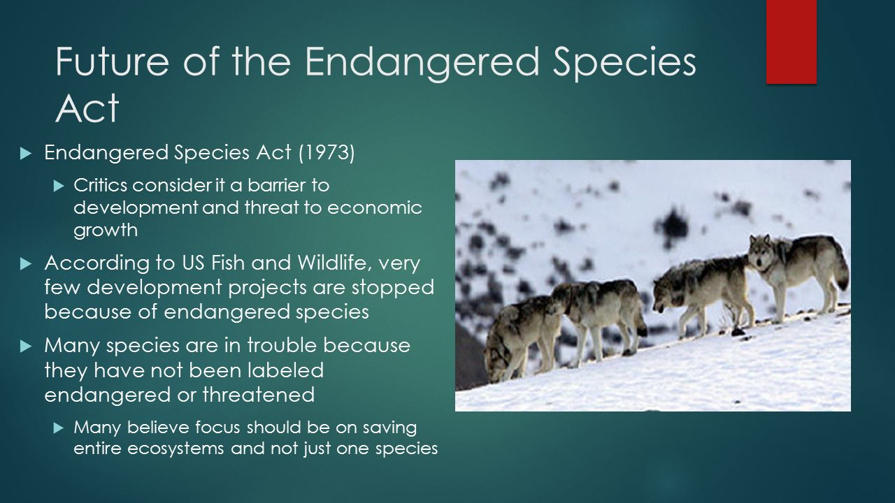 Endangered species should be prioritized