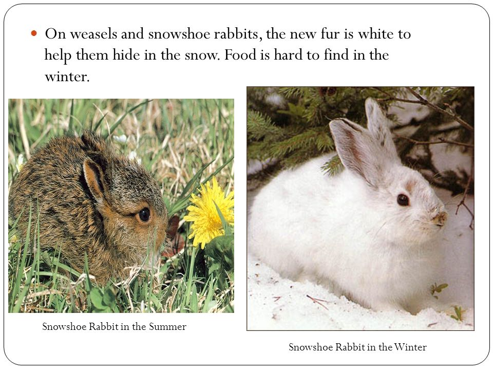 how to keep rabbits outside in winter
