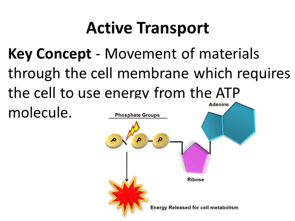 cells and movement of substances Movement substances move in and out of cells in 2 ways  osmosis and plant cells plant cells have a _____ which is surrounded by a _____ cell walls are _____ and will allow all substances in and out of the cell  226 movement of substances worksheet subject: biology author: declan finlayson last modified by: declan finlayson.