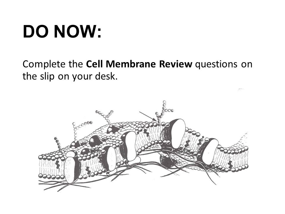 do now  complete the cell membrane review questions on the
