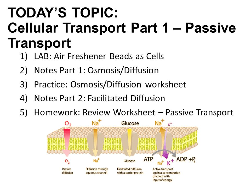 DO NOW Complete the Cell Membrane Review questions on the slip on – Osmosis Diffusion Worksheet
