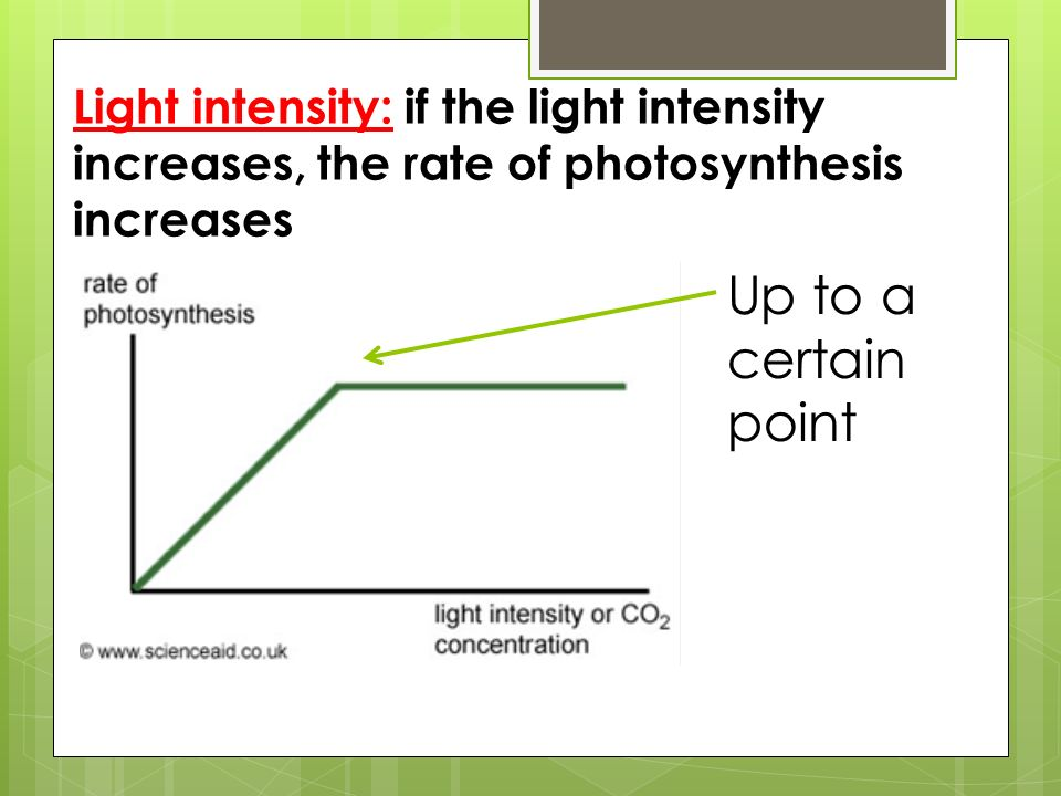 as light intensity increases the rate of photosynthesis Free essay: how does light intensity and carbon dioxide levels affect photosynthesis rate phaladi phaladi 201102379 department of mathematics and science.