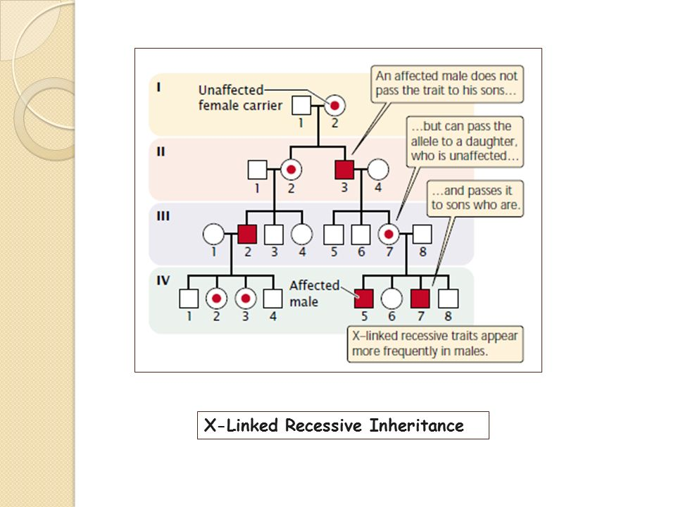 x linked recessive inheritance pdf