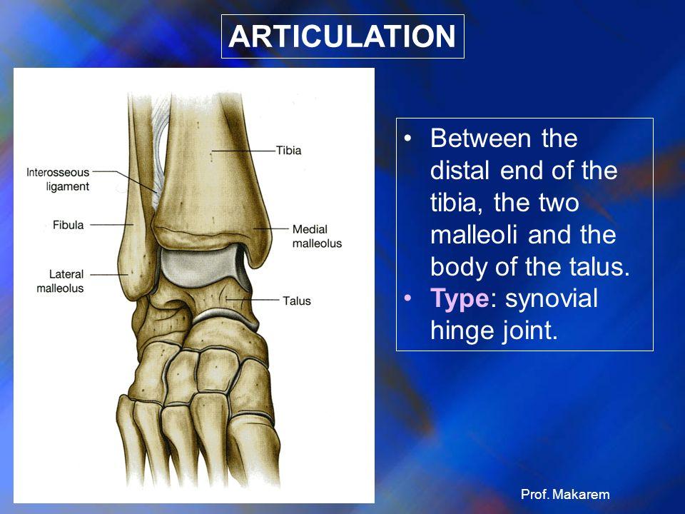 KNEE ANKLE. - ppt video online download Hinge Joint Knee