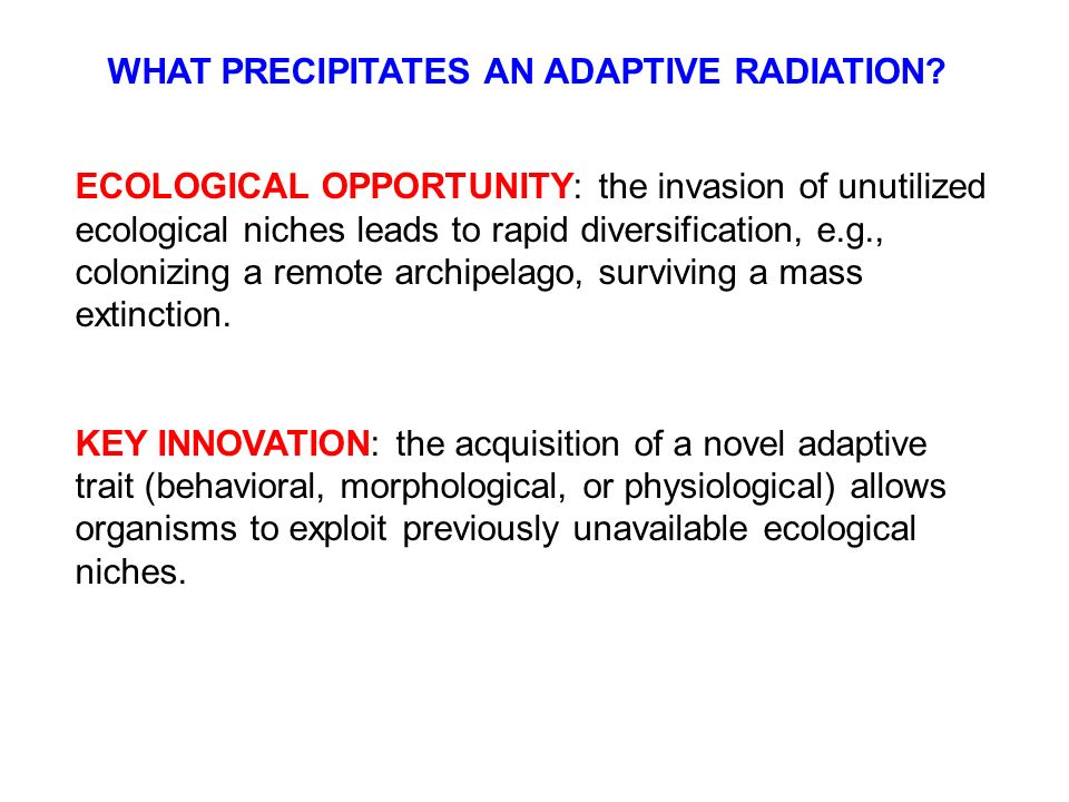key innovations and adaptive radiations essay  the oligocene-miocene transition, suggesting their adaptive radiation into a  novel arid habitat  the radiation within this group was hypothesised to be  associated with  rabosky, d l automatic detection of key innovations, rate  shifts,  wallace, a r natural selection and tropical nature: essays on.