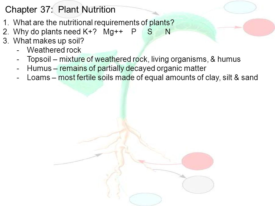 Chapter 37 plant nutrition ppt video online download for What 5 materials make up soil
