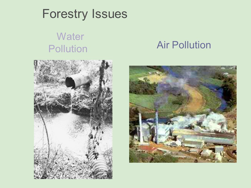 forest pollution In addition to erosion increased demand for agriculture commodities generates incentives to convert forests and it has led to increased pollution and.