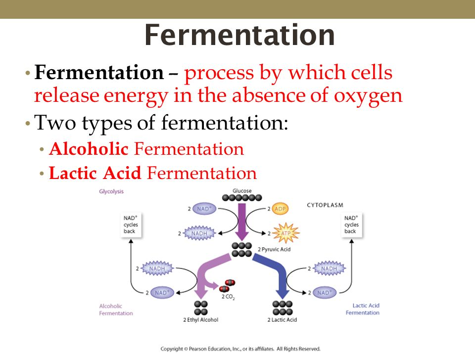 glycolysis and fermentation relationship
