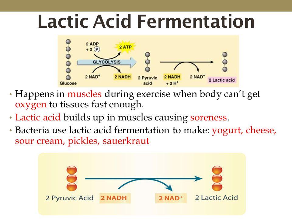 Fermentation Of Yeast Equation