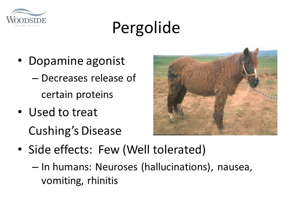 Common Equine Medications and Their Effects - ppt download