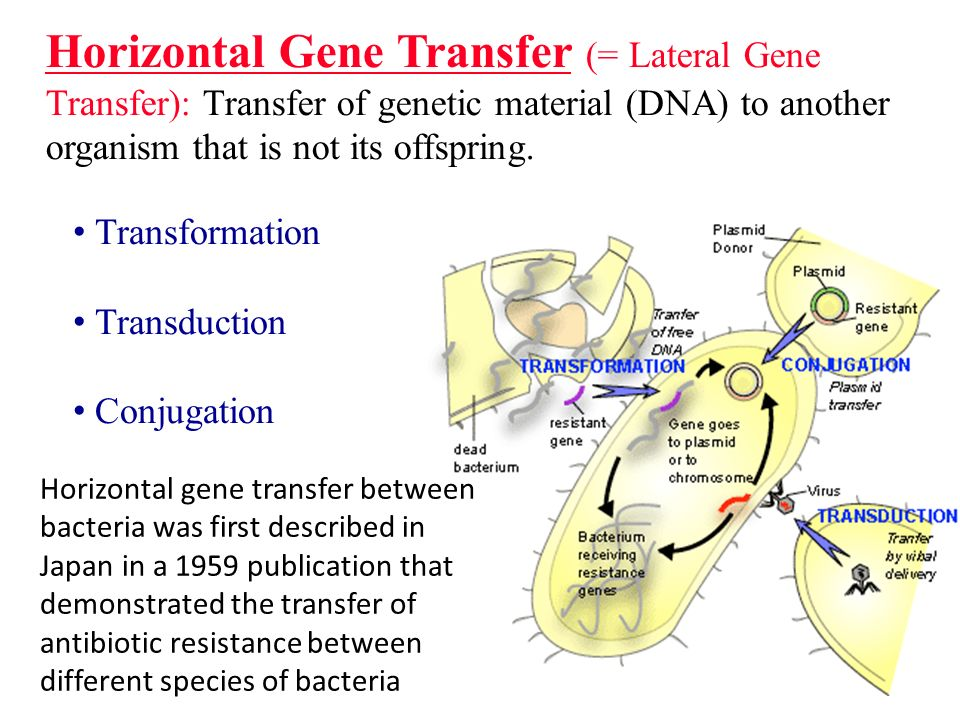 The Basic Difference Between Horizontal and Vertical Gene Transfer