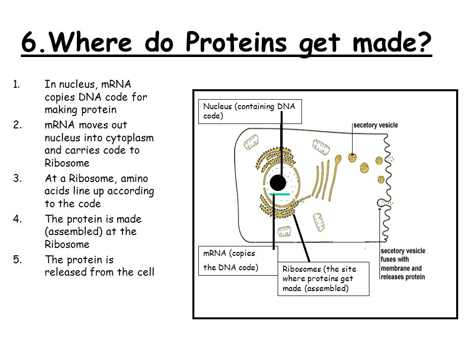 DNA, RNA, Proteins & Genetic Engineering - ppt video ...