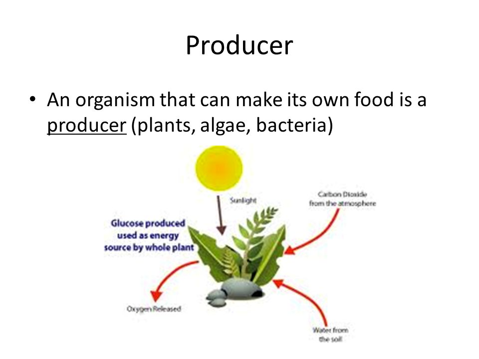 Organism That Moves On Its Own Eats Food
