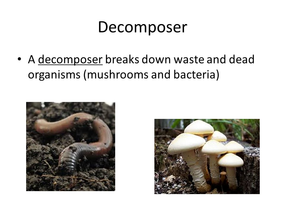 Chapter 10 Ecosystems. - ppt download