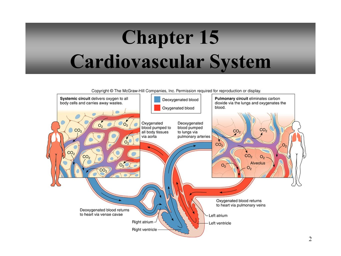 Cardiovascular system Anatomy and Physiology - ppt download