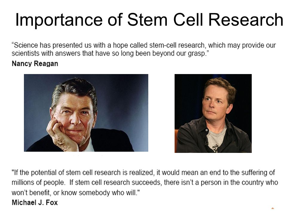 the importance of funding stem cell research Free stem cell research the importance of stem cell research - by with a lifted ban on federal funding to front the research of stem cell and.
