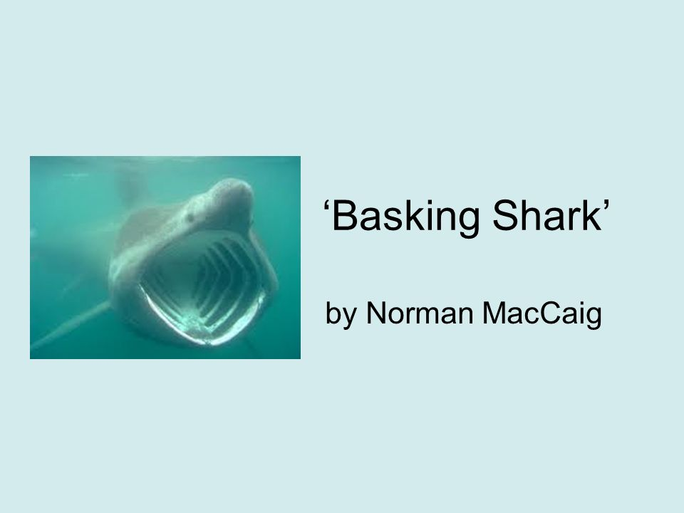 basking shark by norman maccaig Basking shark by norman maccaig to stub an oar on a rock where none should be to have it rise with a slounge out of the sea is a thing that happened once ( too often) to me but not too often—though enough i count as gain that once i met, on a sea tin-tacked with rain that roomsized monster with a.