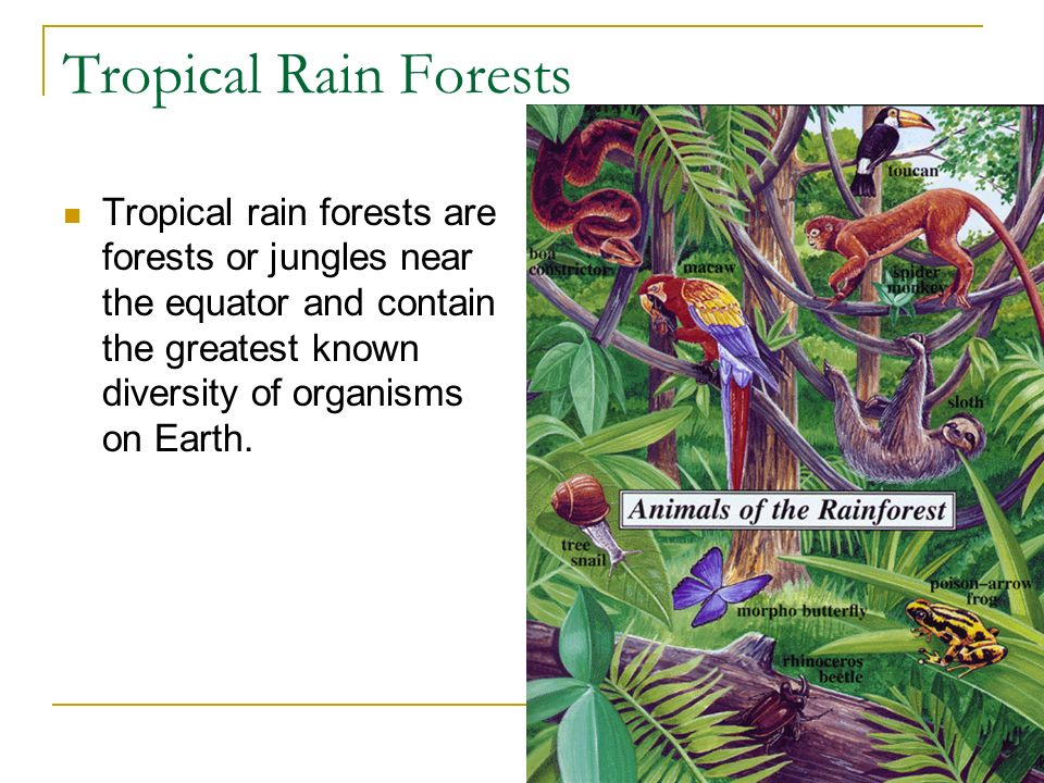 Tropical Rain Forests Tropical rain forests are forests or jungles near the equator and contain the greatest known diversity of organisms on Earth.
