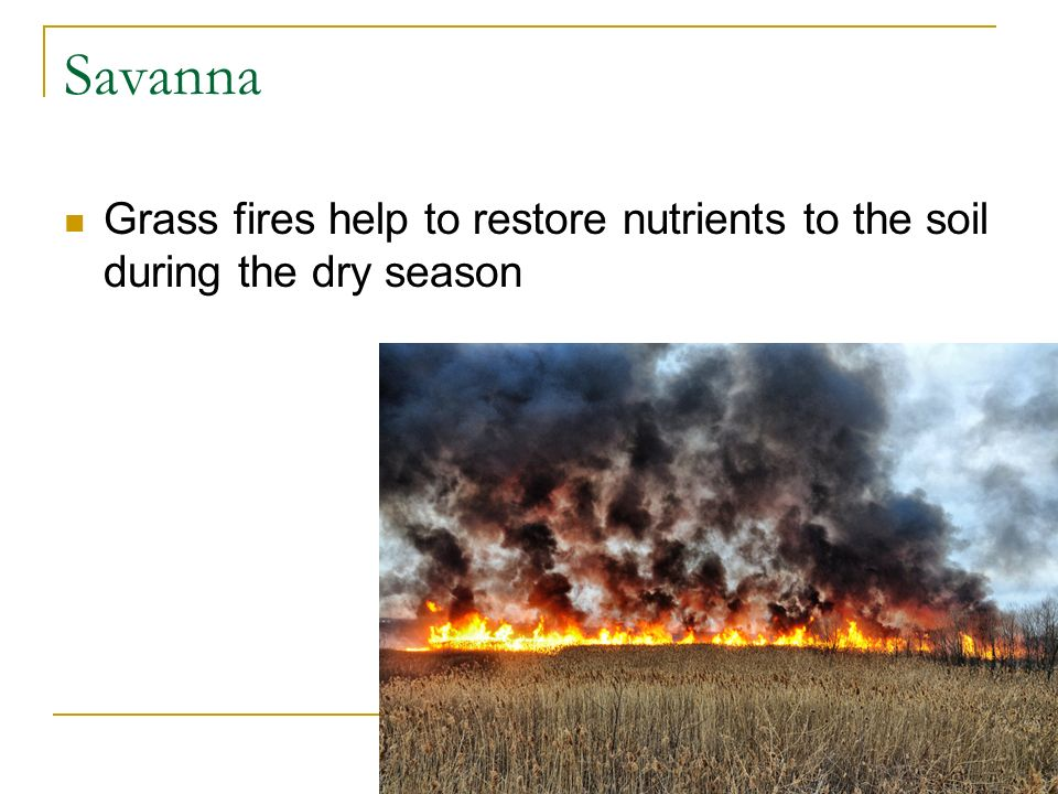 Savanna Grass fires help to restore nutrients to the soil during the dry season