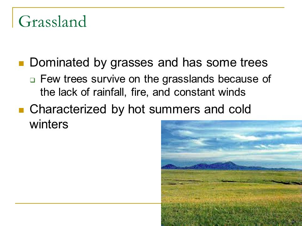 Grassland Dominated by grasses and has some trees
