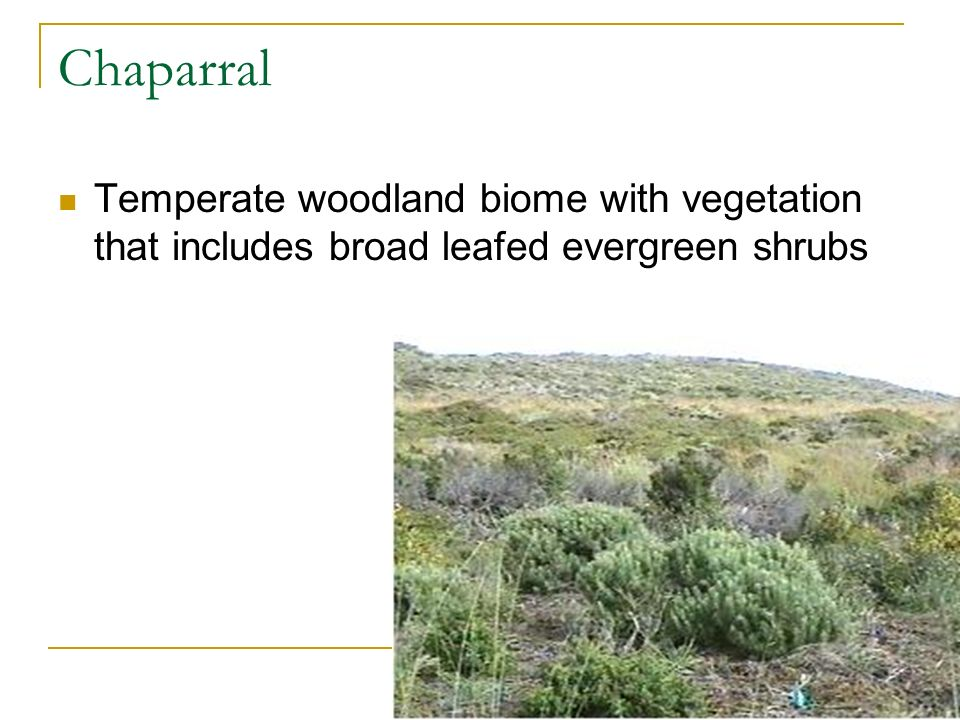 Chaparral Temperate woodland biome with vegetation that includes broad leafed evergreen shrubs