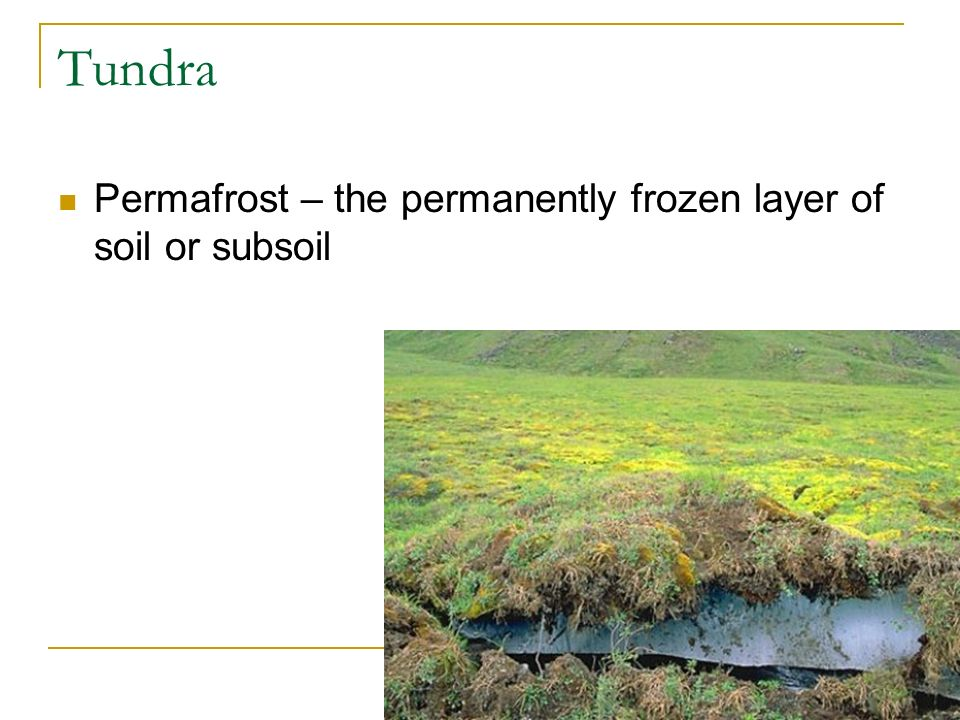 Tundra Permafrost – the permanently frozen layer of soil or subsoil