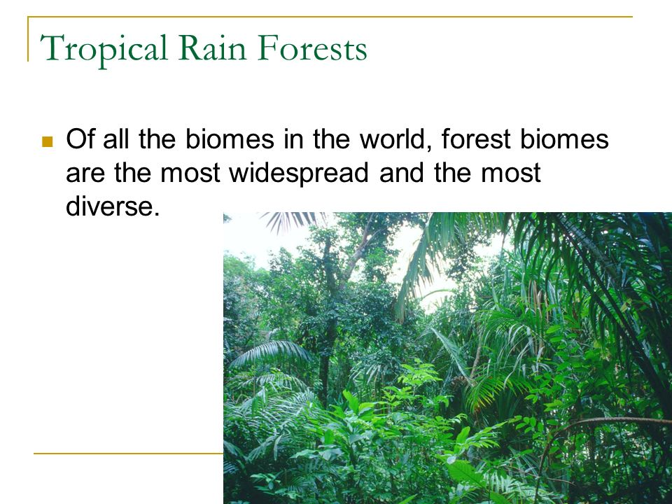 Tropical Rain Forests Of all the biomes in the world, forest biomes are the most widespread and the most diverse.