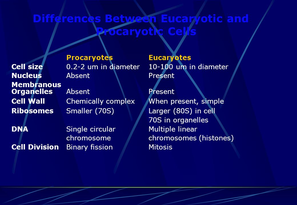 Differences Between Eucaryotic