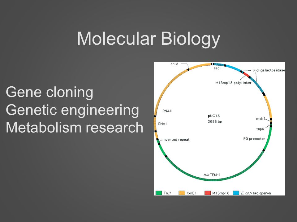 an introduction to the history of genetic engineering or cloning Biology investigatory project (genetic 2 introduction 2 3 history of genetic engineering 4 genetically modified.