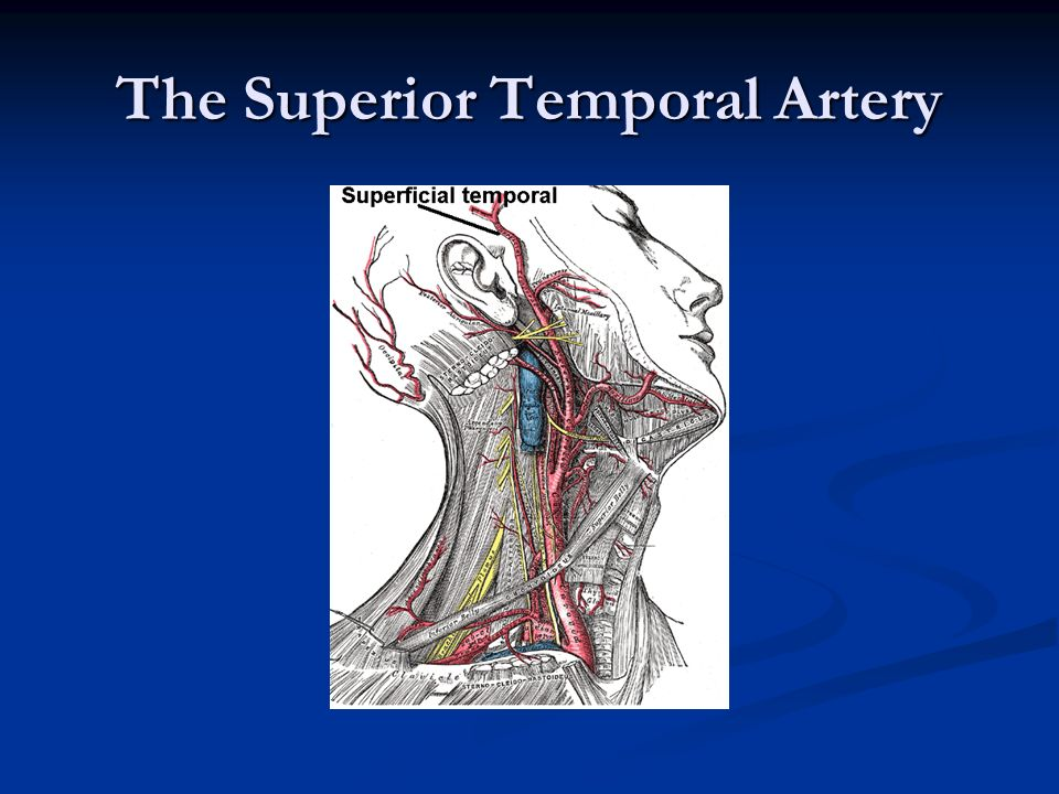 Sonographic Evaluation Of Neck Vasculature Cross Sectional