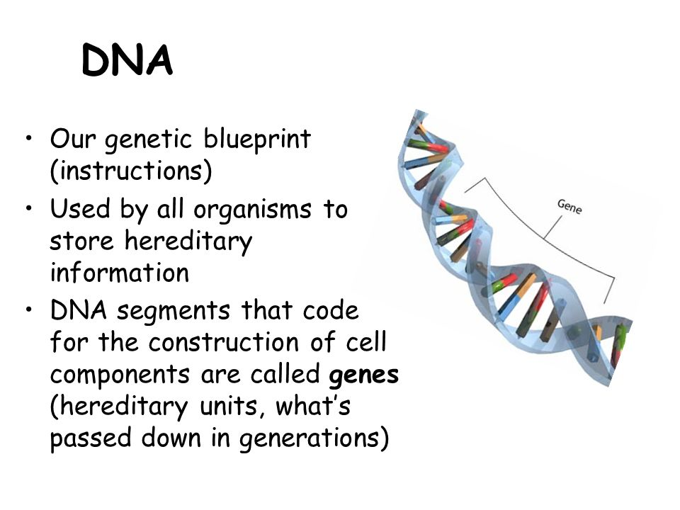 Genetics ppt video online download 2 dna our genetic blueprint malvernweather Choice Image