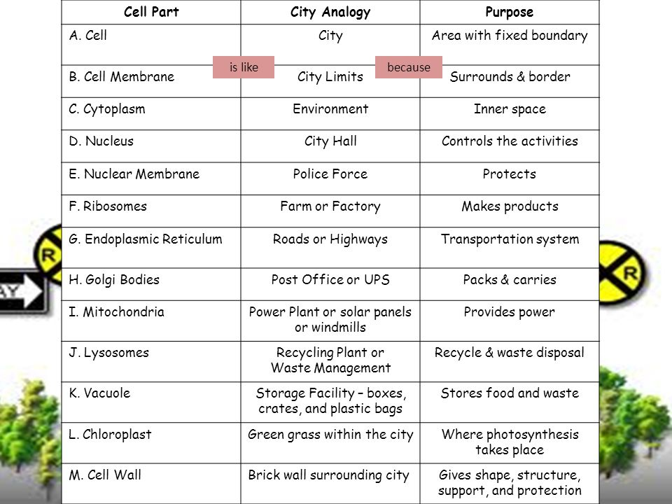 Cell City Worksheet - Geersc