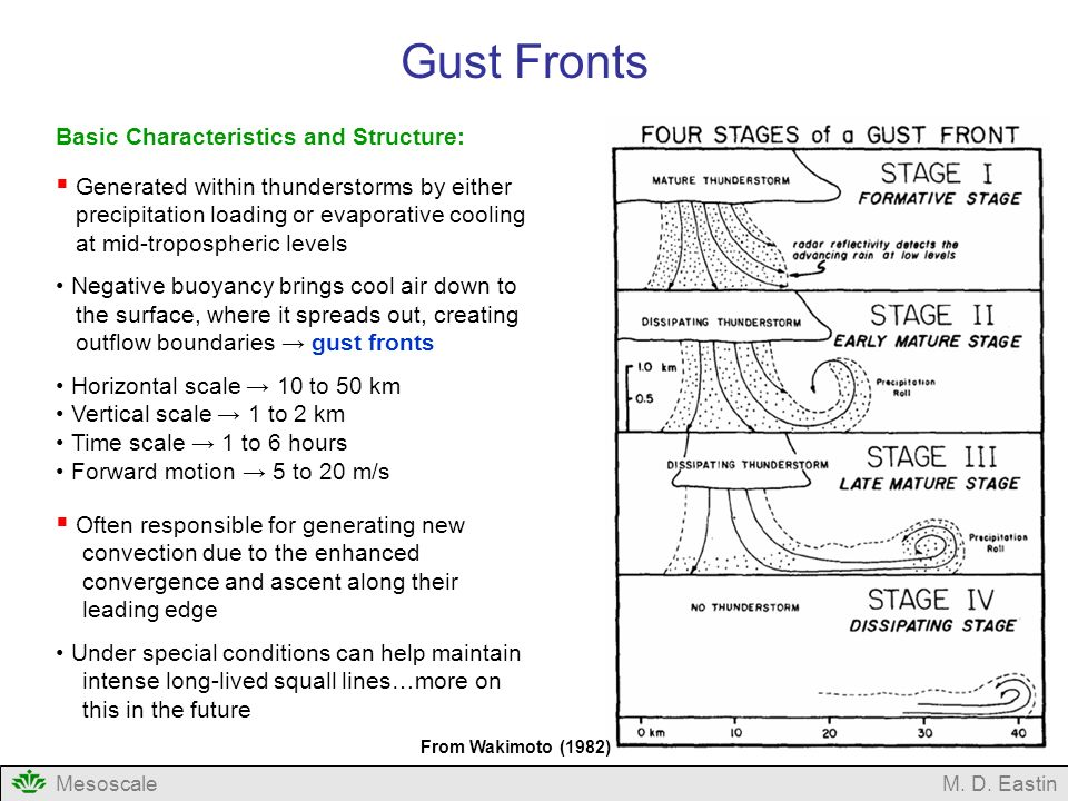Gust Fronts Basic Characteristics and Structure: