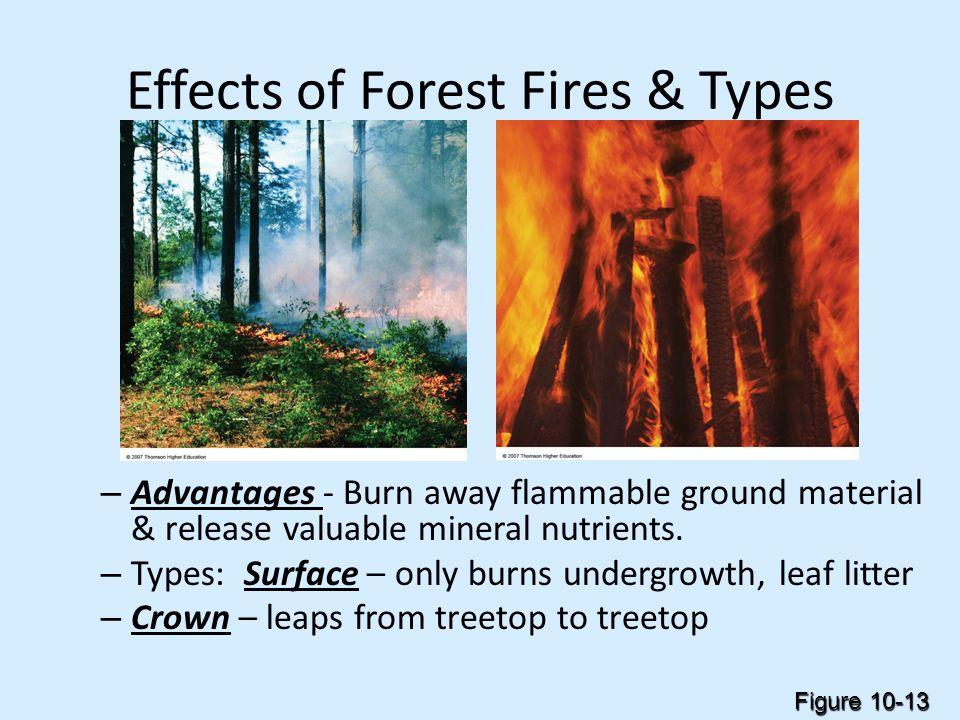 Forests & Grasslands Management - ppt download
