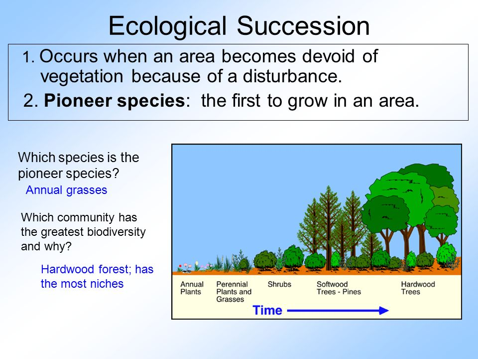 ecological succession in tropical rainforest and In tropical rainforest, flooding happens quite often from the profuse rain this strips the topsoil, so the environment must create new secondary succession.