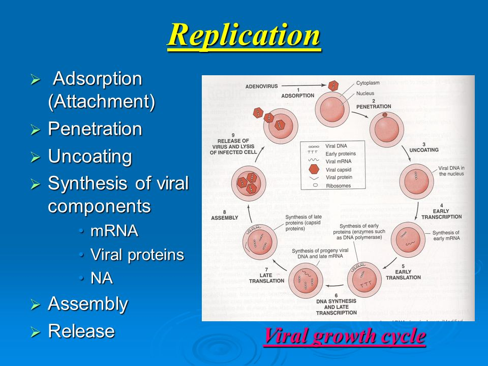 introduction for dengue virus