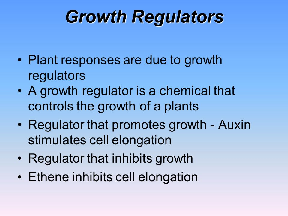 the use of auxins and their effects on rooting Relative to root formation, some effects of the auxins have been the plant self regulates the use of the auxins as it is needed, for root formation and other.