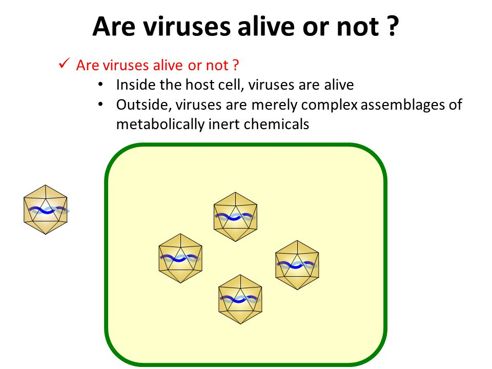 VIRAL DEFINITION AND HISTORY Ppt Video Online Download