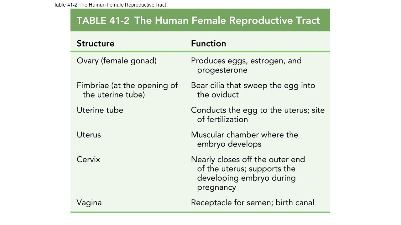 the male reproductive system essay Reproduction practice questions question cross-section through the testes would   practice exam questions practice multiple choice quiz - reproductive systems.