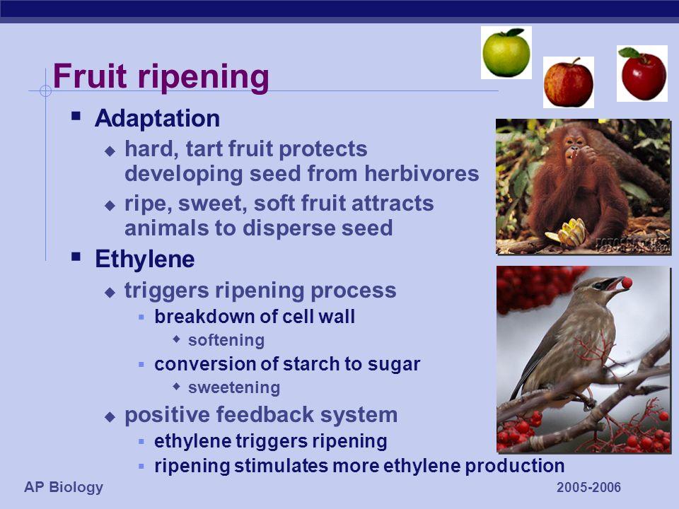 Plant Hormones Auxins Gibberellins Abscisic Acid Ethylene