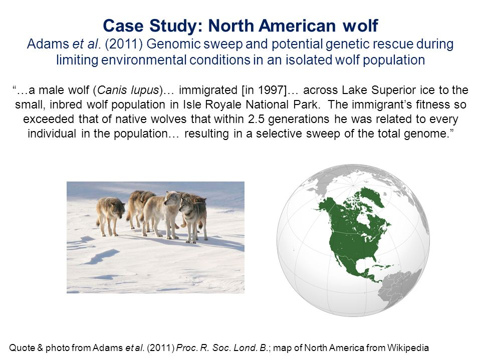 The Effects of Wolf Predation