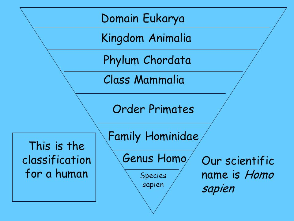 the taxonomy of three homo species 7 homo species closest to present human that existed on the earth millions of years ago homo species are the there are three key fossils available of homo.