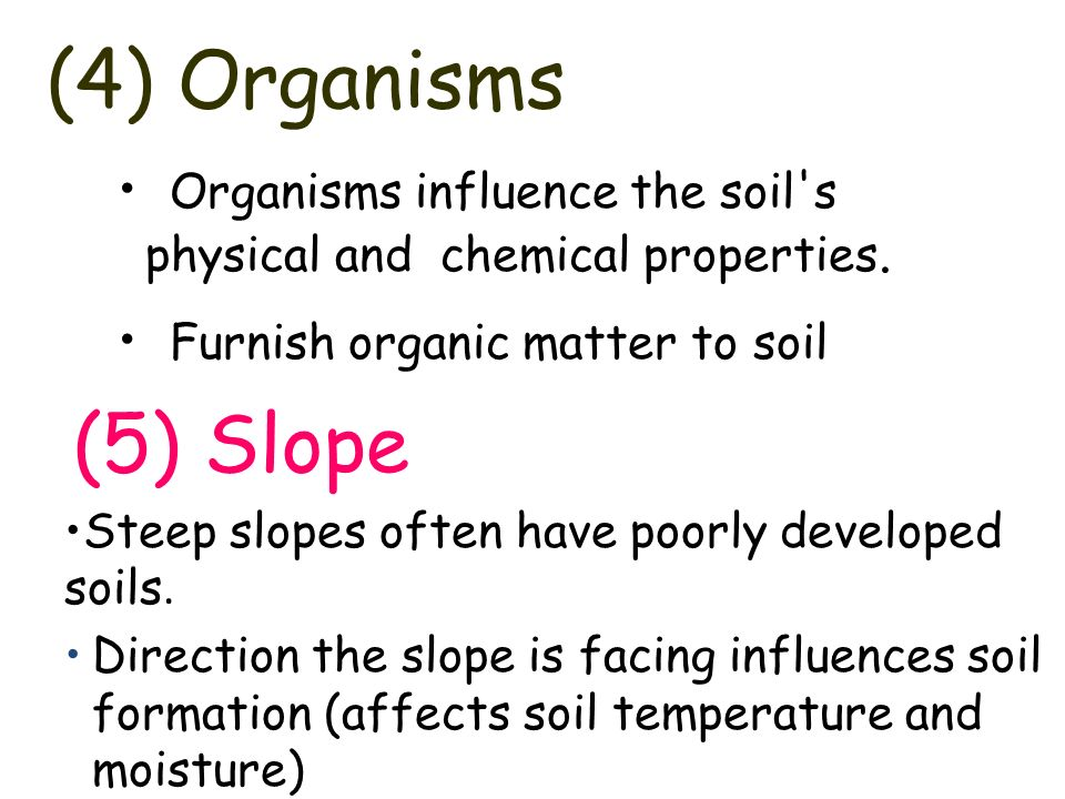 Soils soil formation the results of weathering ppt for Soil organisms