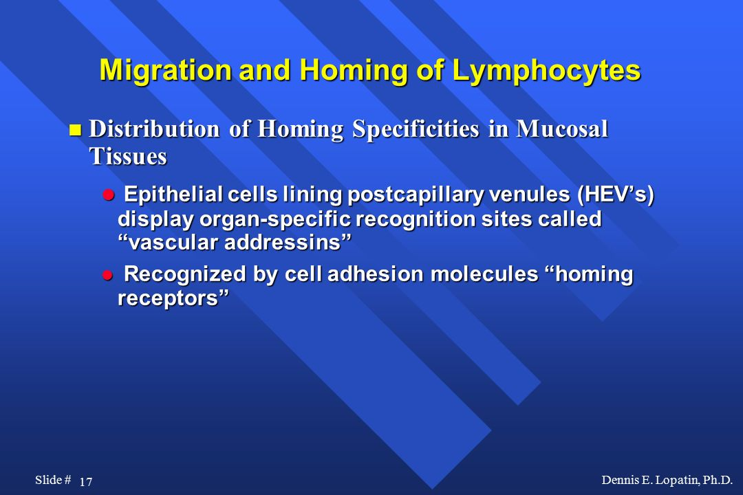 Migration and Homing of Lymphocytes
