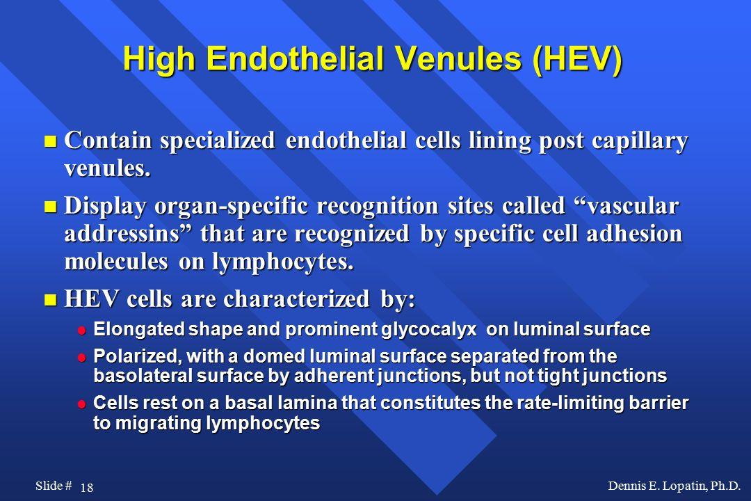 High Endothelial Venules (HEV)